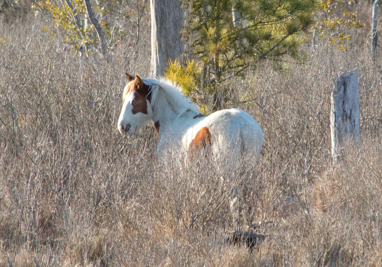 Wild Pony Expedition! (video)